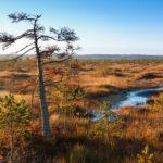 Šumavská rašeliniště - nejcennější poklad šumavské přírody